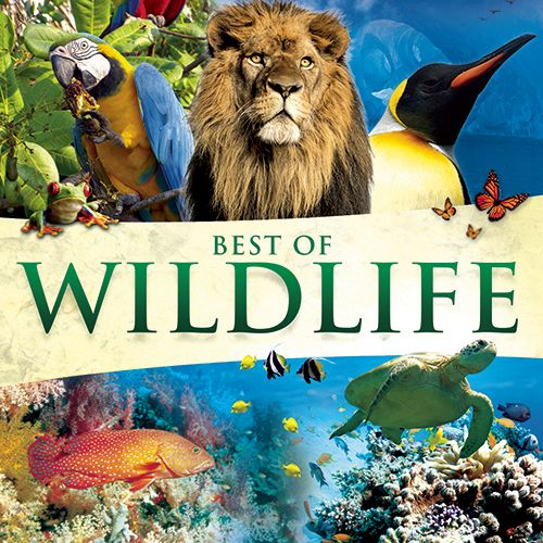 Best of Wildlife nature sounds CD